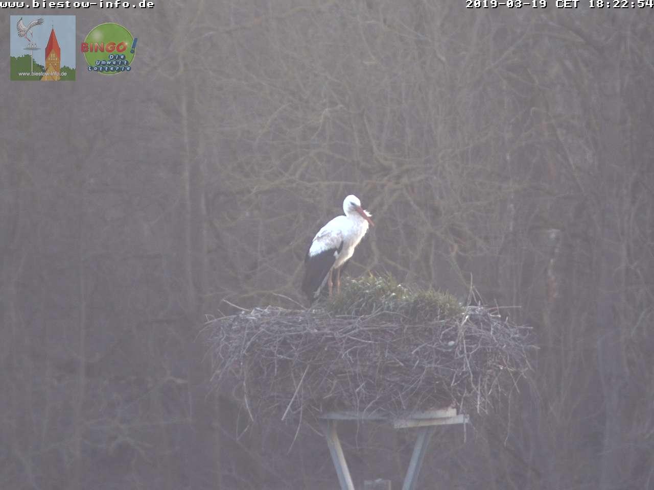 Am 19.03.2019 kehrt der erste Storch nach Biestow zurück