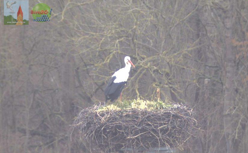 Am 15.03.21 traf der erste Storch in Biestow ein